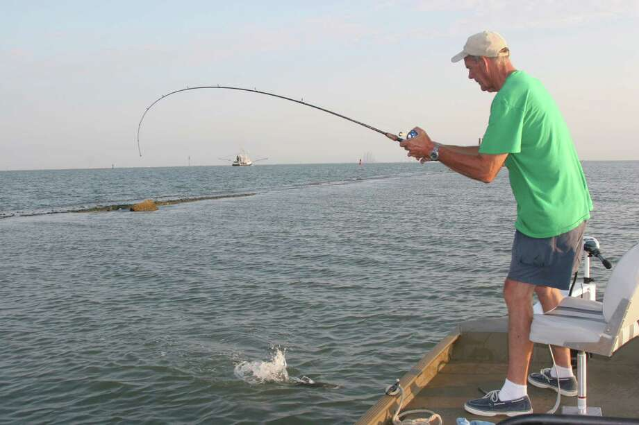 """Gill net samplings of Texas bays indicate the average size of speckled trout is up in most areas, and anglers could see good fishing for """"quality"""" specks this summer. / HOUSTON CHRONICLE"""