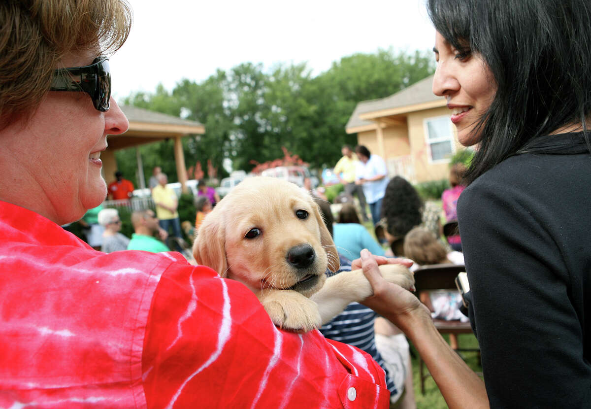 Denise Gonzales and Susana Dias play with Egypt as Guide Dogs of Texas (GDTX) and Guide Dogs for the Blind (GDB) induct seven puppies into their puppy program. The puppies were handed over to volunteers who will raise the puppies for the next 18 months to prepare them for their formal guide dog training.