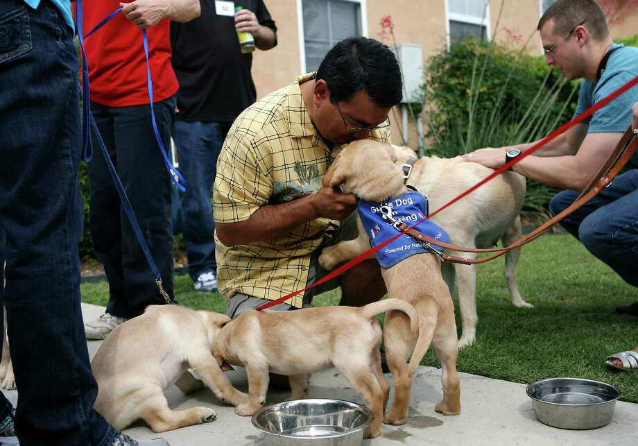 Pete Gonzales plays with Eddie June 8, 2013 before Eddie is taken home by his volunteer puppy raiser after the Guide Dogs of Texas (GDTX) puppy induction ceremony conluded. GDTX celebrated its fifth litter of guide dog puppies from its breeding program, which plays a critical role in the guide dog school's ability to better serve a population of nearly 175,000 legally blind Texans. Gonzales was the brood holder for all the puppies. Photo: Cynthia Esparza, For San Antonio Express-News / For San Antonio Express-News