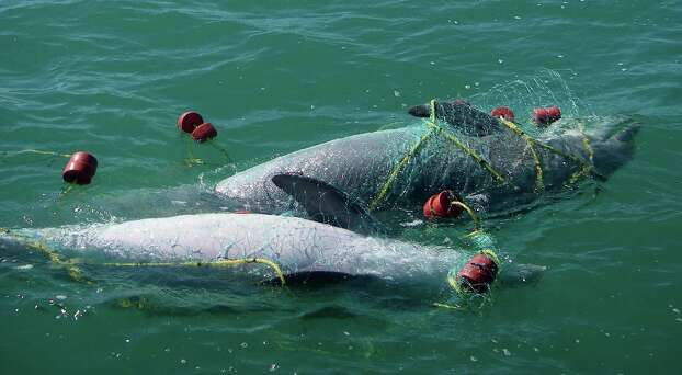 Illegal fishing on the rise in gulf of mexico houston for Texas non game fish