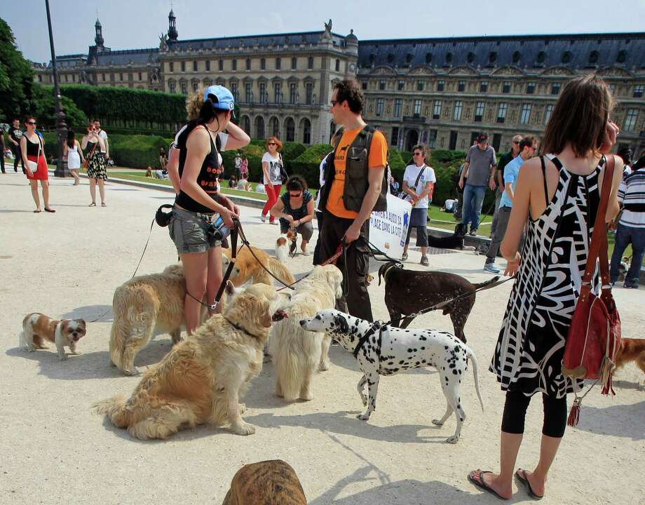 Dog owners gathered at  the Tuileries Gardens, in Paris, Saturday June 8, 2013, as part of a demonstration to demand more park space and access to public transport for the four-legged friends. Photo: AP