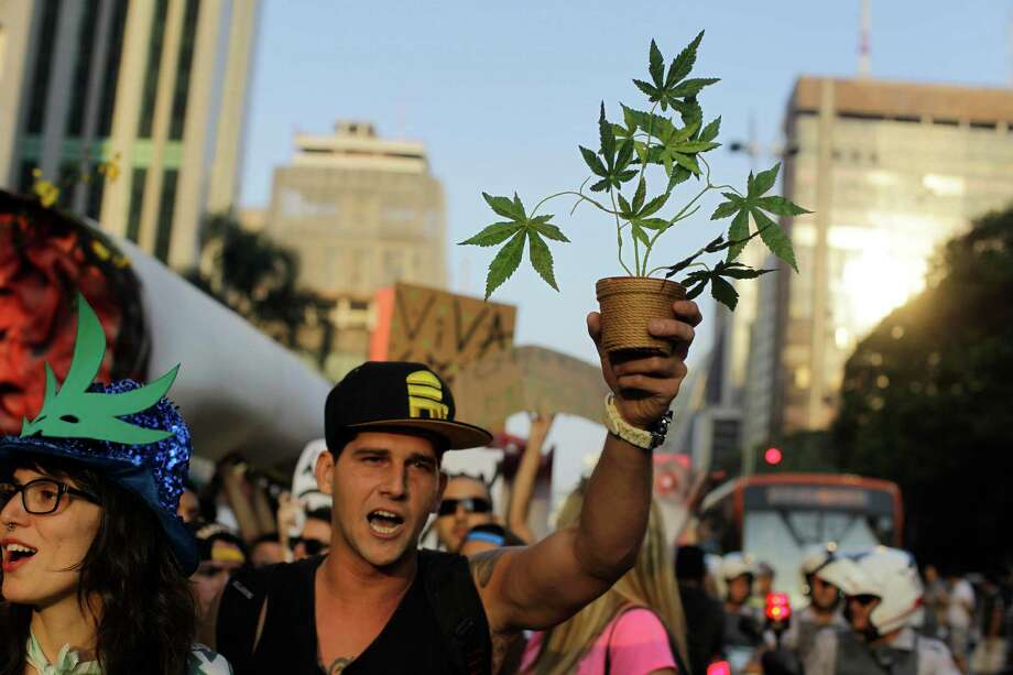 A demonstrator chants slogans as he holds up a potted marijuana plant during a march in favor of the legalization of marijuana in Sao Paulo, Brazil, Saturday, June 8, 2013. Photo: AP