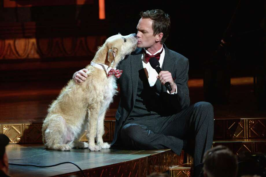 """Host Neil Patrick Harris has a moment with """"Sandy"""" from the Broadway revival of  """"Annie""""  during the 67th annual Tony Awards Sunday night at Radio City Music Hall in New York City. The 2-year-old terrier mix named Sunny was discovered at the BARC Animal Shelter in Houston. Photo: Andrew H. Walker, Staff / 2013 Getty Images"""