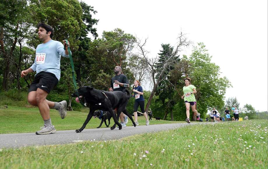 People jog their way to the end of the 14th annual Furry 5k Fun Run and Walk at Seward Park on Sunday, June 9, 2013. The run benefitted the Seattle Animal Shelter and brought out hundreds of canines and their humans. Photo: LINDSEY WASSON / SEATTLEPI.COM