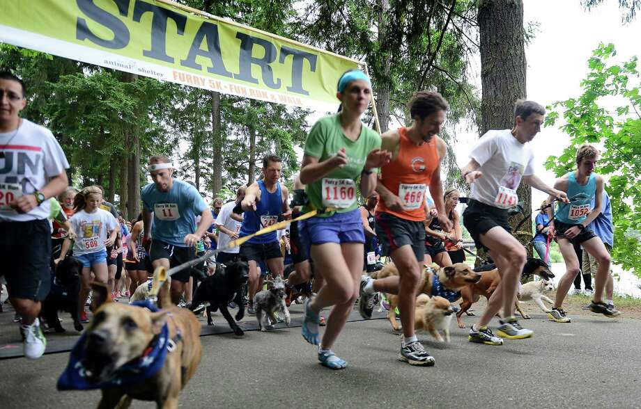 Runners take off from the start line during the 14th annual Furry 5k Fun Run and Walk at Seward Park on Sunday, June 9, 2013. The run benefitted the Seattle Animal Shelter and brought out hundreds of canines and their humans. Photo: LINDSEY WASSON / SEATTLEPI.COM