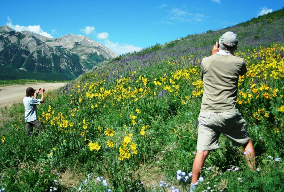 Photographing nature's colorful display is a popular activity among some 200 events  in the annual  Crested Butte Wildflower Festival.
