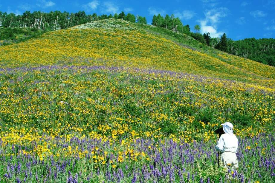 Flower-laden hills are common in summer among the 2 million acres of wilderness in the Gunnison-Crested Butte region of Colorado.