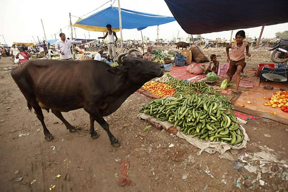 No free samples! A cow helps herself to vegetables at a booth in an Allahabad, India, 
