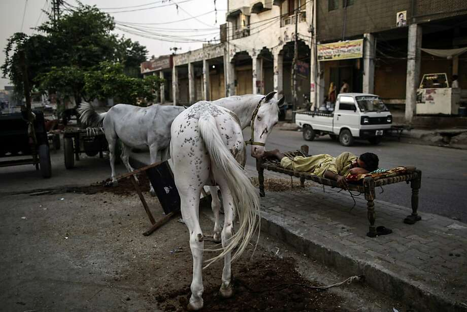 At the Rawalpindi Rent-A-Horse:Two models to choose from, unlimited mileage, return 