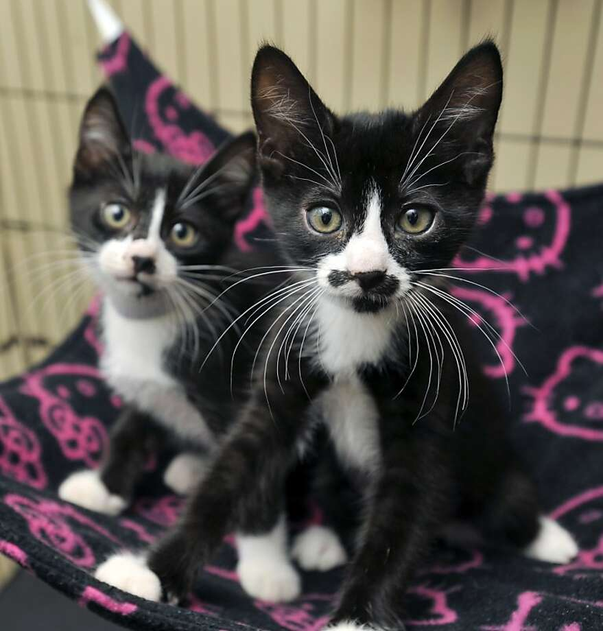 Postage Stamp and Super Mario: A pair of mischievous mustaches are ready to be adopted 