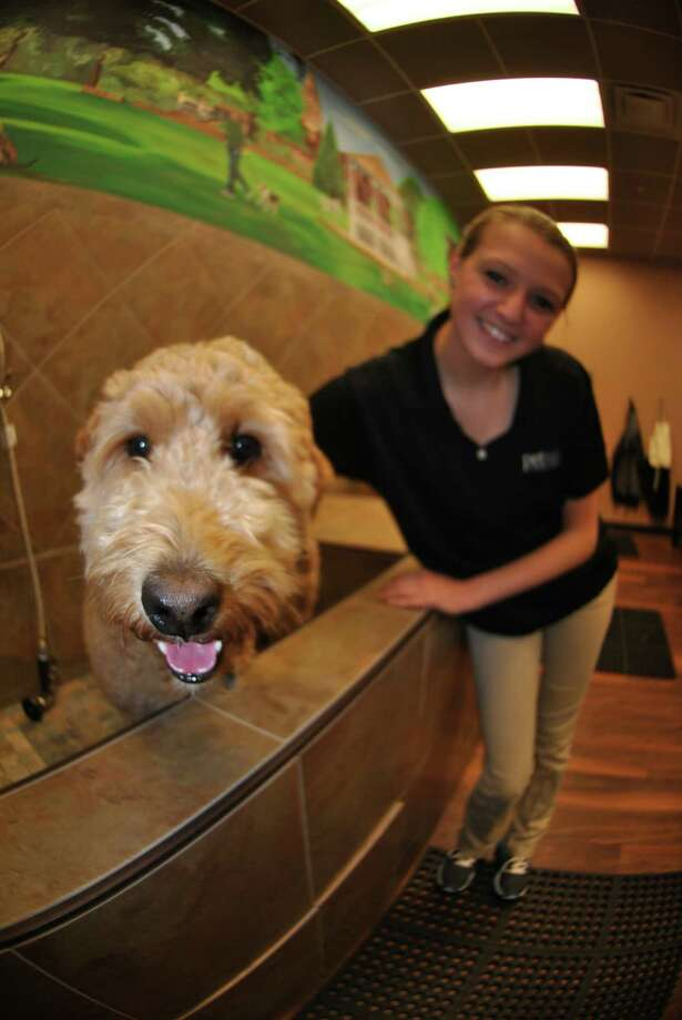 Pet valus washing stations welcome additions to norwalk employee morgan rochefort shows chili a goldendoodle and potential new client the washing station solutioingenieria Images