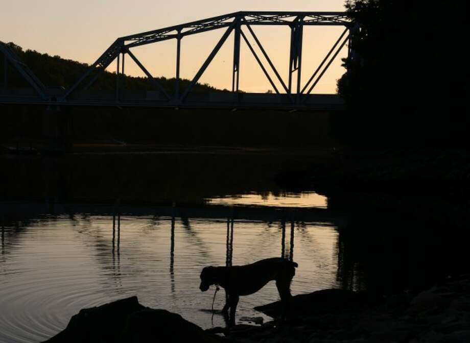 Cassie, a Great Dane from New Haven, takes a drink from Lake Lillinonah as police and search groups scan the water for New Milford resident Eric Langlois near the Lake Lillinonah boat launch area in Bridgewater, Conn. on June 12, 2013.  Langlois was reported missing Tuesday evening at Lover's Leap State Park in New Milford.