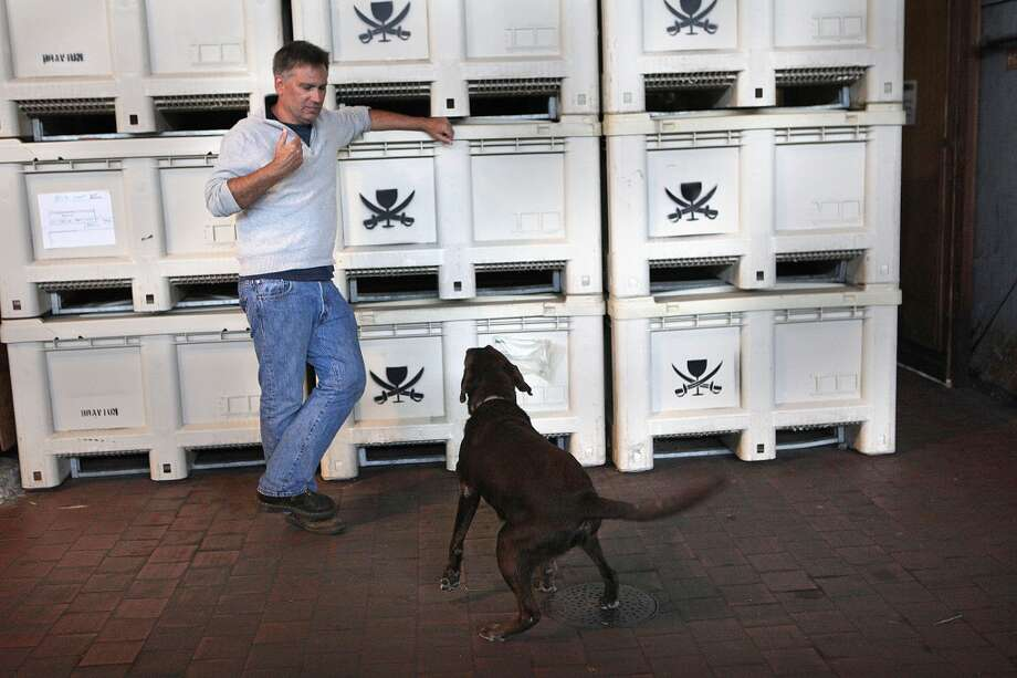 Owner Jim Mirowski plays with his dog, Koa, in front of grape crates used during harvest season at Treasure Island Wines on Treasure Island in San Francisco, Calif.,  on Tuesday, June 11, 2013.  Jim lost half a ton of grapes he had harvested for making wine during one of last year's power outages.  It has since been fixed but residents say power loss has recently been getting continuously worse.  The city says the power grid is 50 years old and in need of an update.