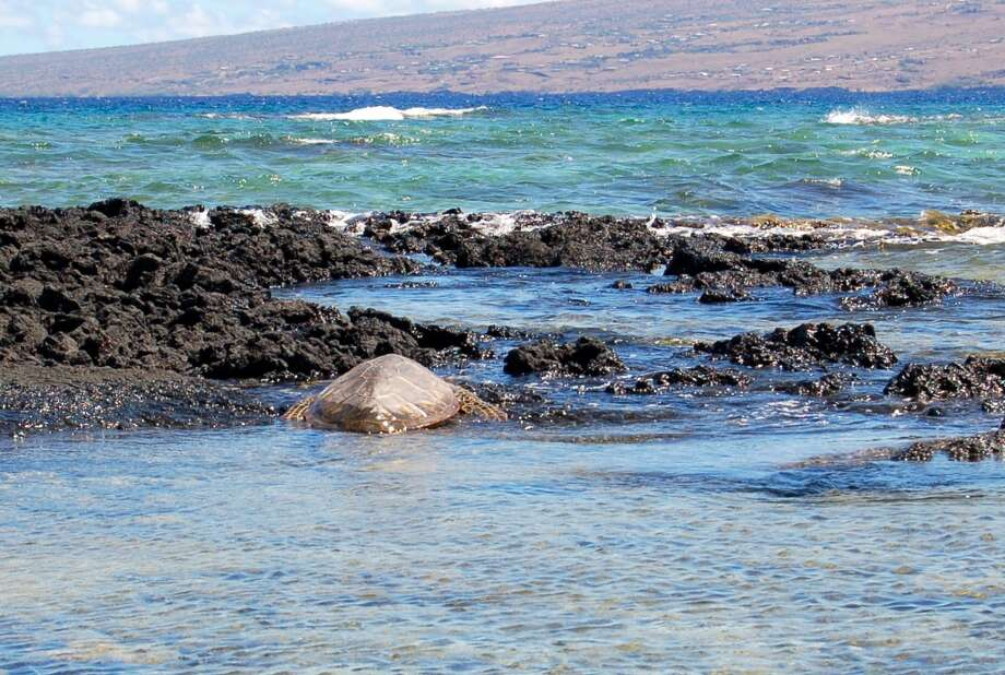 The clear waters of Puako on the Kohala Coast provide a place for this honu to keep his head down.