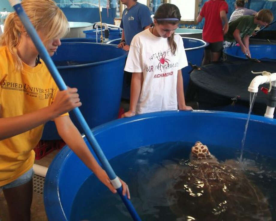 Teens can learn about turtle conservation at Sea Turtle Camp programs in Costa Rica, Hawaii and North Carolina.