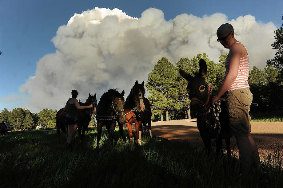 COLORADO SPRINGS, CO - JUNE 11:  Katie Adamson, right, holds onto a donkey that she found wandering along the road, while her sister Heather Stanley, left, attends to their horses off of Herring Road  in the midst of the Black Forest Fire in Colorado Springs, CO on June 11, 2013..  Many homes have already been lost to the raging fire that continues to burn out of control.  Photo by Helen H. Richardson/The Denver Post via Getty Images) Photo: Helen H. Richardson, Denver Post Via Getty Images / Copyright - 2013 The Denver Post, MediaNews Group.