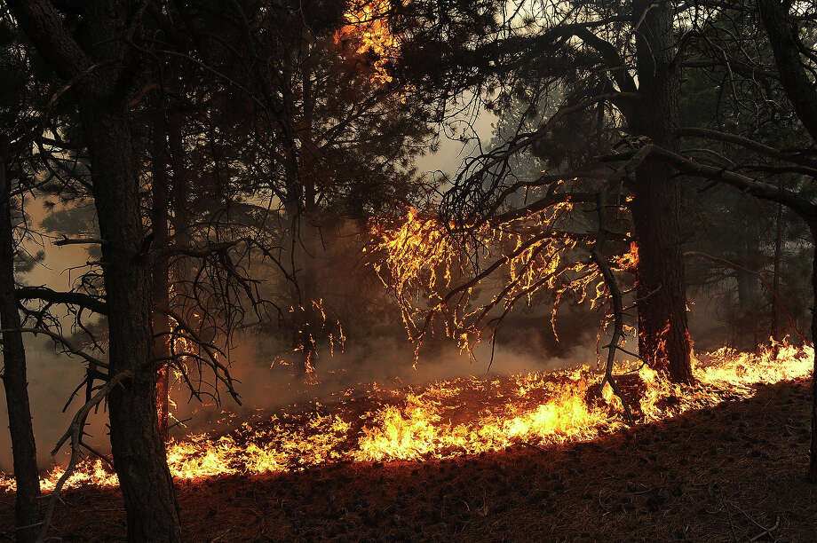 Fire runs along the bed of the forest off of Herring Road in the Black Forest northeast of Colorado Springs, CO on June 11, 2013.  Many homes have already been lost to the raging fire that continues to burn out of control. Photo: Helen H. Richardson, Denver Post Via Getty Images / Copyright - 2013 The Denver Post, MediaNews Group.