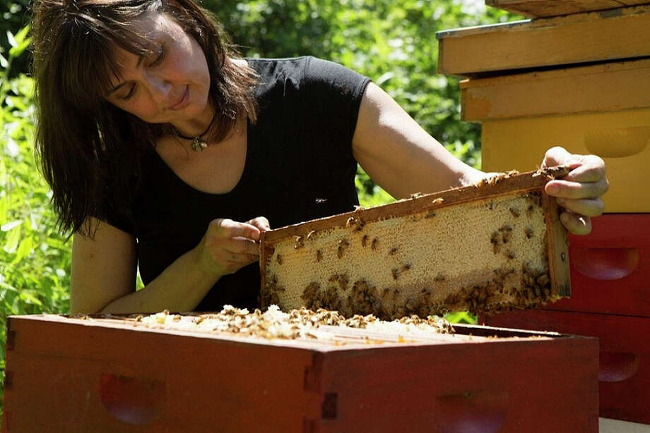 Beekeeper, author, honey connisseur and founder of Red Bee Honey, Marina Marchese checks out a frame at her Weston (Conn.) apiary in Weston. She will be speaking and conducting a tasting at Audubon Greenwich on Saturday, June 22, 2013. For more information and to reserve your spot (tickets are $35), call 203-869-5272, Ext. 239. Photo: Contributed Photo / Stamford Advocate Contributed