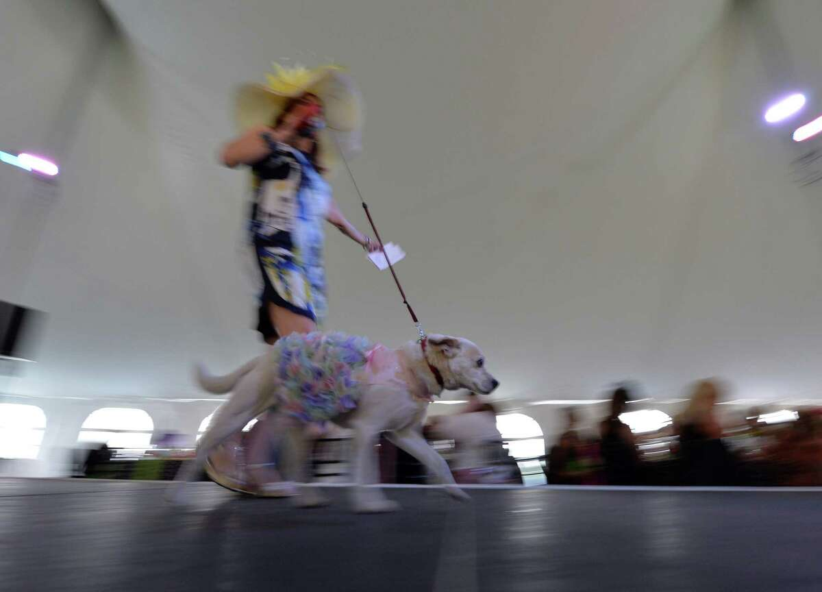 TV personality Benita Zahn moves down the runway with her dog Tiki at the American Cancer Society's annual fundraiser Dogs & Divas Fashion Show Thursday June 13, 2013 at the Saratoga National Golf Course in Saratoga Springs, N.Y. (Skip Dickstein/Times Union)