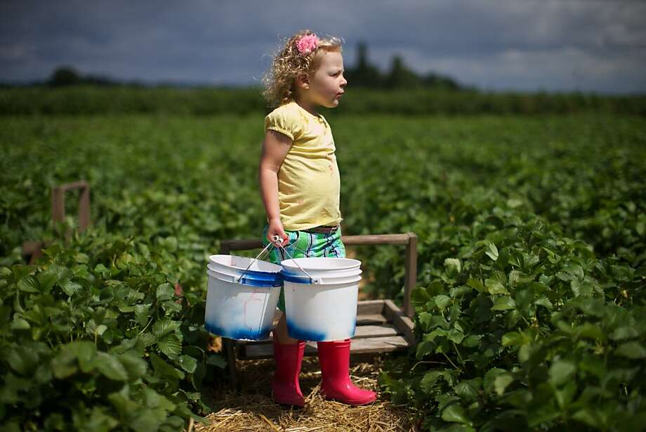 I come to seize your berries, not to praise them: Determined 3-year-old Adison Jensen 