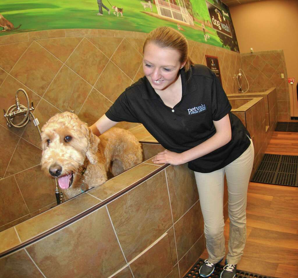 Pet valus washing stations welcome additions to norwalk employee morgan rochefort shows chili a goldendoodle and potential new client the washing station solutioingenieria Choice Image