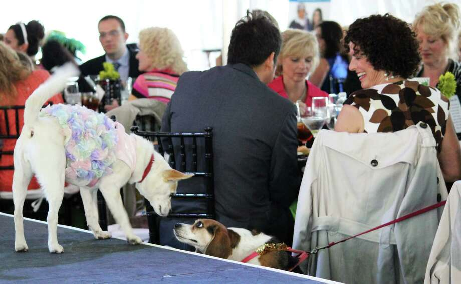 Were you Seen at the Dogs and Divas fundraiser for the American Cancer Society at the Saratoga National Golf Club in Saratoga Springs on Thursday, June 13, 2013? Photo: Trudi Shaffer/Times Union