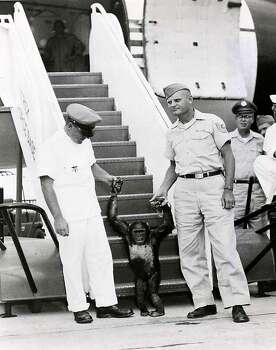 Military personnel with a chimpanzee used for an animal flight testing program.