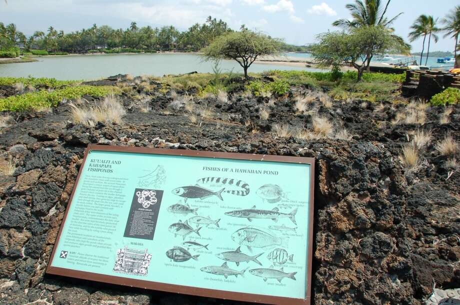 Between the beach and the Waikoloa Beach Marriott lie two large historic fishponds, no longer actively maintained according to the beachboys.