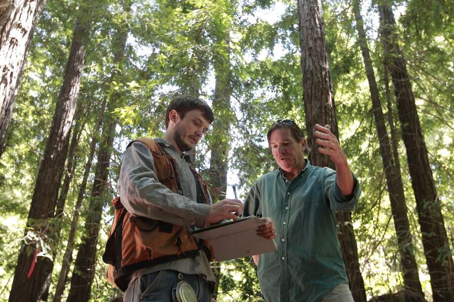 Brian Pickett, a forester, (left)  and Chris Kelly, the California Director for the The Conservation Fund collect data in a redwood stand to be used in forest management, on the Preservation Ranch property on Tues. June 11, 2013 near Annapolis, Calif.  A public-private partnership led by The Conservation Fund has purchased 16,645 acres of forest known as Preservation Ranch, the largest conservation project in the history of Sonoma County. The property, a vast forested parcel threatened by development and vineyard conversion, is part of a campaign by the fund to preserve more than 125,000 acres of Douglas fir and redwood forests and use sustainable management practices to conserve critical habitat, restore native watersheds and support local economies through 'light-touch' timber management.