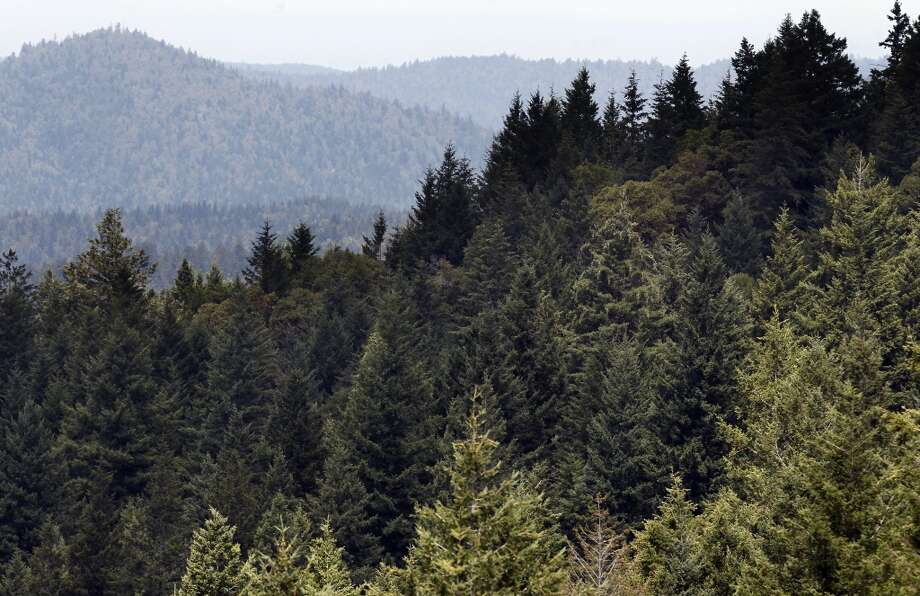The thick forested landscape of the Preservation Ranch property on Tues. June 11, 2013 near Annapolis, Calif.  A public-private partnership led by The Conservation Fund has purchased 16,645 acres of forest known as Preservation Ranch, the largest conservation project in the history of Sonoma County. The property, a vast forested parcel threatened by development and vineyard conversion, is part of a campaign by the fund to preserve more than 125,000 acres of Douglas fir and redwood forests.