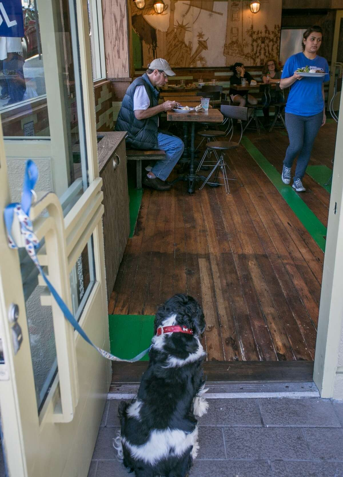 A dog watches his owner eat lunch at Glaze Teriyaki Grill in San Francisco.