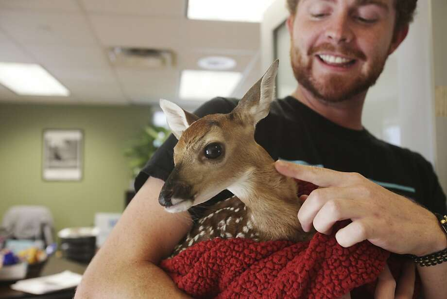Bambi in a blankie:It's all fawn and games at the Humane Society camp in San Antonio, where Chris Garza was telling kids how to interact with wildlife. Photo: Abbey Oldham, San Antonio Express-News