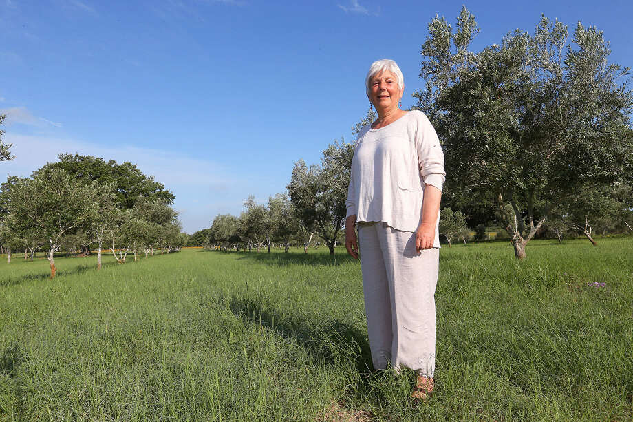Saundra Winokur's once-a-week tours at her Sandy Oaks Olive Orchard in Elmendorf draw crowds, and the orchard restaurant's dinners, themed to different olive-growing regions, can fill up weeks in advance. Photo: Photos By Jerry Lara / San Antonio Express-News