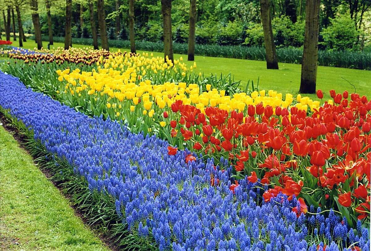 If you time your trip to the Netherlands just right, the gardens at Keukenhof will be if full blooming splendor.