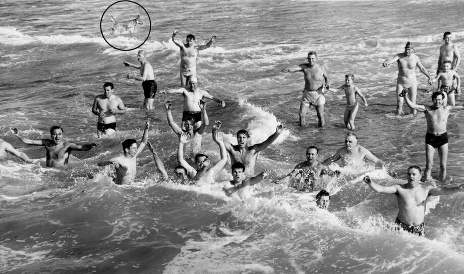 Dolphin Club Annual Ocean Dunk. We didn't circle the dog, it was already circled in the archive photo. December 17, 1950.