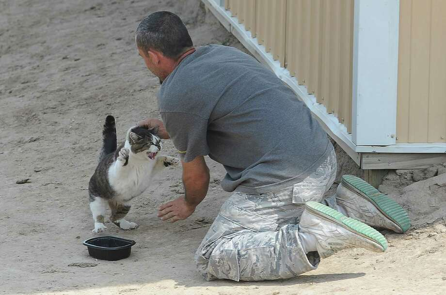 Phelan Warren attempts to get one of the barn cats at a property where they were rescuing horses on Thursday, June 13, 2013. Volunteers with the Kit Carson Riding Club have been going into the area to rescue animals.  (AP Photo/The Colorado Springs Gazette, Jerilee Bennett) Photo: AP