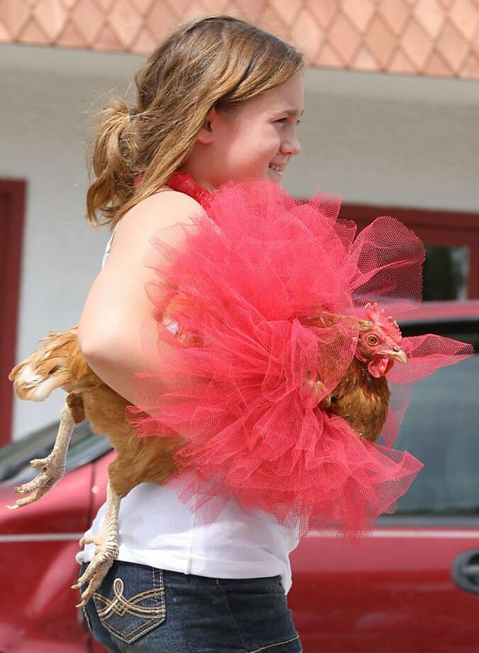 Cock-a-tutu doo! Sydney Palmer rushes a ballerina to a pet parade performance in Pequot Lakes, Minn. Photo: Kelly Humphrey, Associated Press
