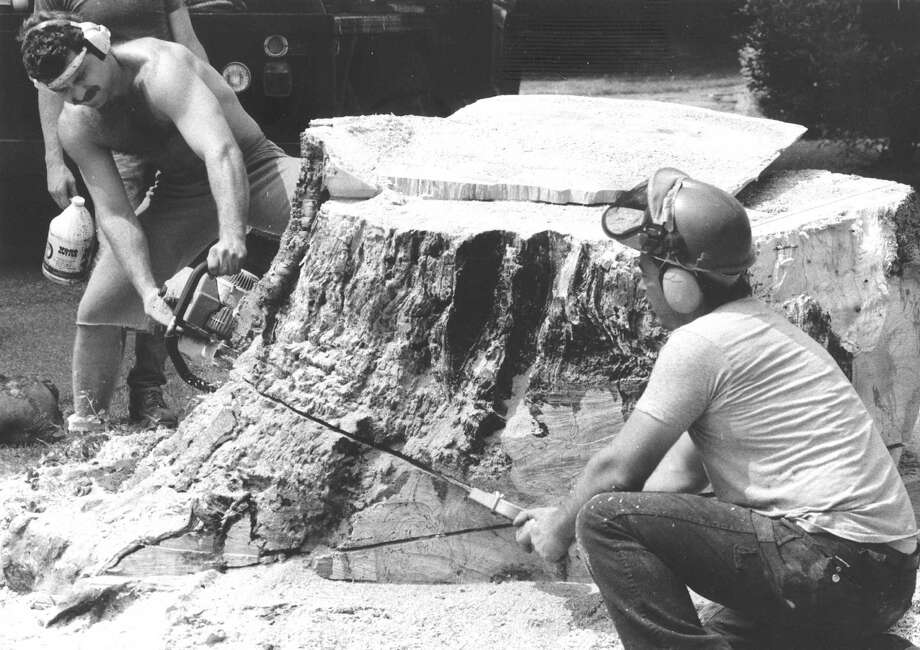 Stamford Parks Department workers Bob Barker and Mark McEvoy finish off the stump of a very old Ash tree, believed to be at least 200 years old, on Island Heights Circle on June 20, 1988. The tree was said to have been a beacon for ships headed to Stamford when it was a stop in the spice island route. Photo: Advocate