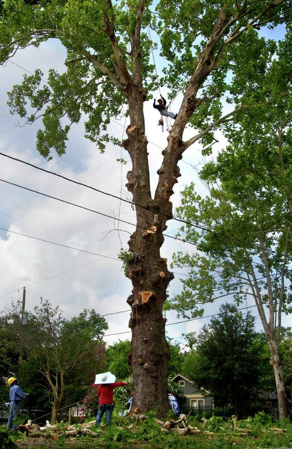 how to cut down a tree away from the house