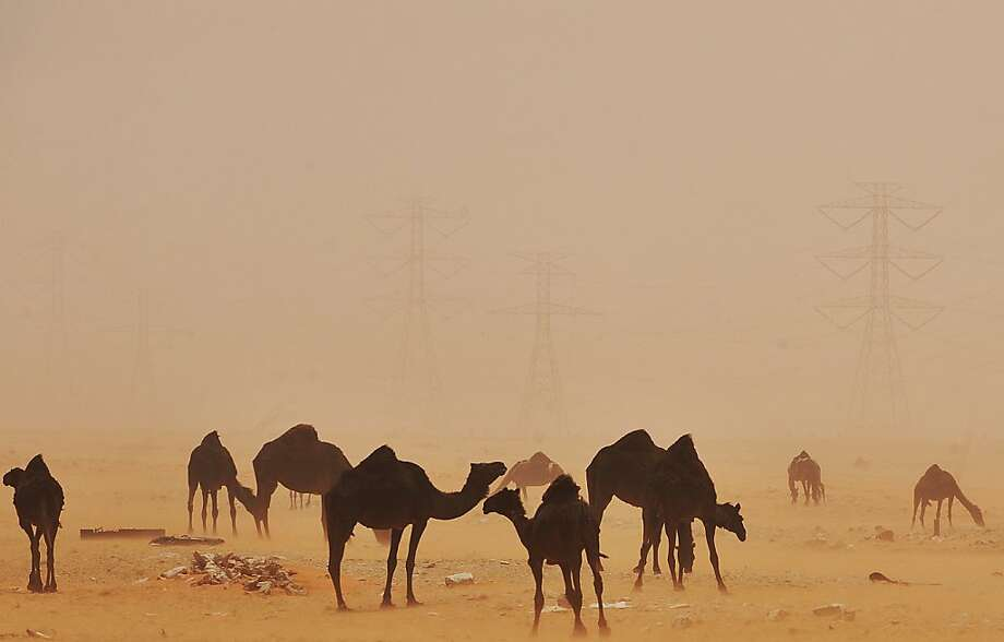 Sahara sand storm: Blowing sand envelops camels in al-Hasa, Saudi Arabia. Photo: Fayez Nureldine, AFP/Getty Images