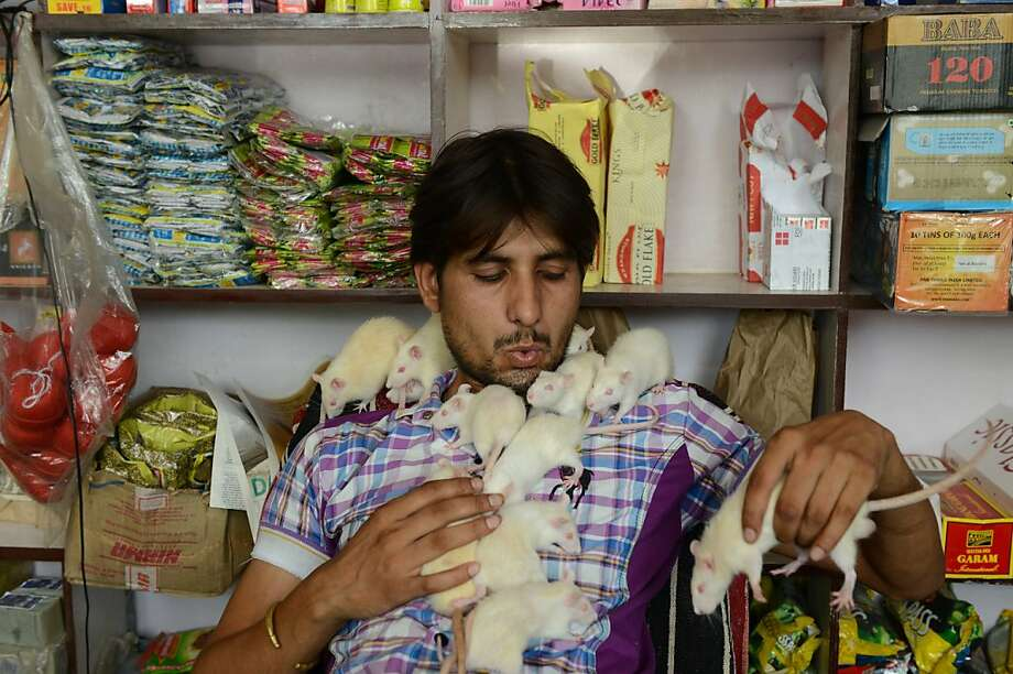 Or why he's always out of cheese:Sonu Sharma can't understand why his grocery store in Ahmedabad, India, doesn't have more customers. (He adopted four white rats as pets about a year ago.) Photo: Sam Panthaky, AFP/Getty Images