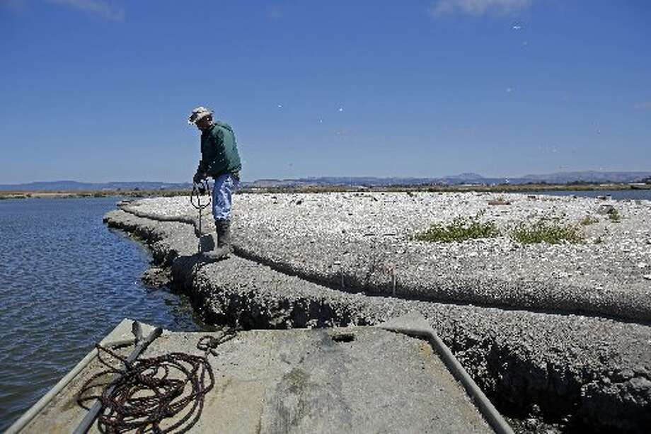 "Wildlife Resource Analyst Dave ""Doc Quack"" Riensche pulls a boat towards on Tern Island where endangered California Least Terns are nesting in Hayward Regional Shoreline in Hayward, Calif. on June 17, 2013."