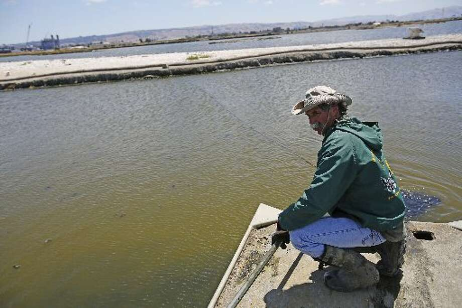 """Wildlife Resource Analyst Dave """"Doc Quack"""" Riensche pulls a boat towards on Tern Island where endangered California Least Terns are nesting in Hayward Regional Shoreline in Hayward, Calif. on June 17, 2013."""