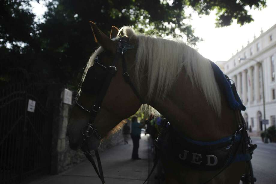 Carriage horses in San Antonio could find themselves working in higher temperatures and with shorter breaks under new rules. Photo: Abbey Oldham / San Antonio Express-News