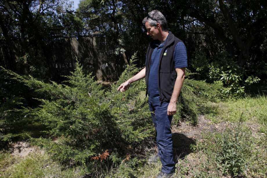 Golden Gate Park manager Eric Andersen walks through Golden Gate Park pointing out the trees broken in a bout of vandalism n the area.
