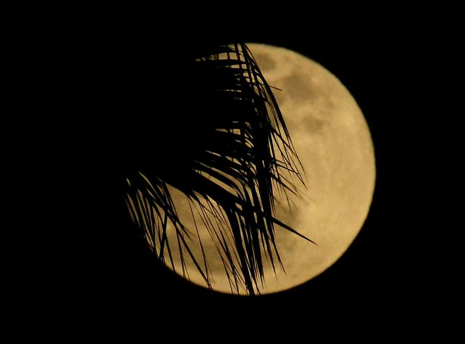 A palm tree foregraounds Super Moon in Los Angeles,California on May 05, 2012.  Tonight's moon is set to appear 14 percent larger and 30 percent brighter from our perspective on Earth.  The Supermoon lines up much closely with perigee -- the moon's closest point to Earth.  The 2012 May full moon falls some six minutes after perigee, the moon's closest point to Earth for this month.  At perigee, the moon lies only 221,802 miles (356,955 kilometers ) away.  Later this month, on May 19, the moon will swing out to apogee -- its farthest point for the month -- at 252,555 miles (406,448 kilometers) distant.    AFP PHOTO /JOE KLAMAR        (Photo credit should read JOE KLAMAR/AFP/GettyImages) Photo: JOE KLAMAR, Getty/ap / 2012 AFP