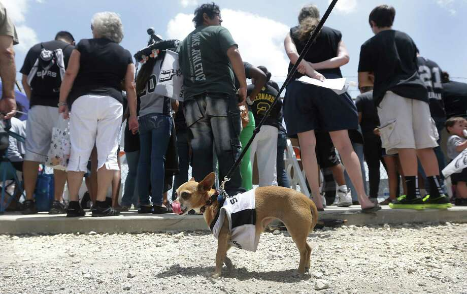 San Antonio Spurs fans line up to see their team arrive at the San Antonio International Airport wearing their Spurs gear, even Jingle Bell the Chihuahua on Friday, June, 21, 2013. Photo: Bob Owen, San Antonio Express-News / ©2013 San Antonio Express-News