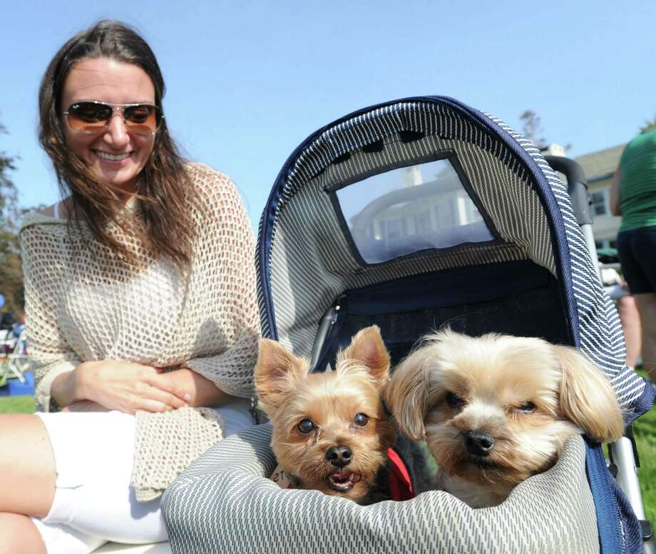 Kristin Auerbach of New York City with her Yorkies, Angelina, left, and Chester, during the Swim Across America event for the Greenwich-Stamford area at Cummings Point in Stamford, Saturday morning, June 22, 2013. Auerbach was at the event to support her husband who was swimming to raise money for Swim Across America, Inc., an organization dedicated to raising money and awareness for cancer research, prevention and treatment, through swimming- related events. Photo: Bob Luckey / Greenwich Time