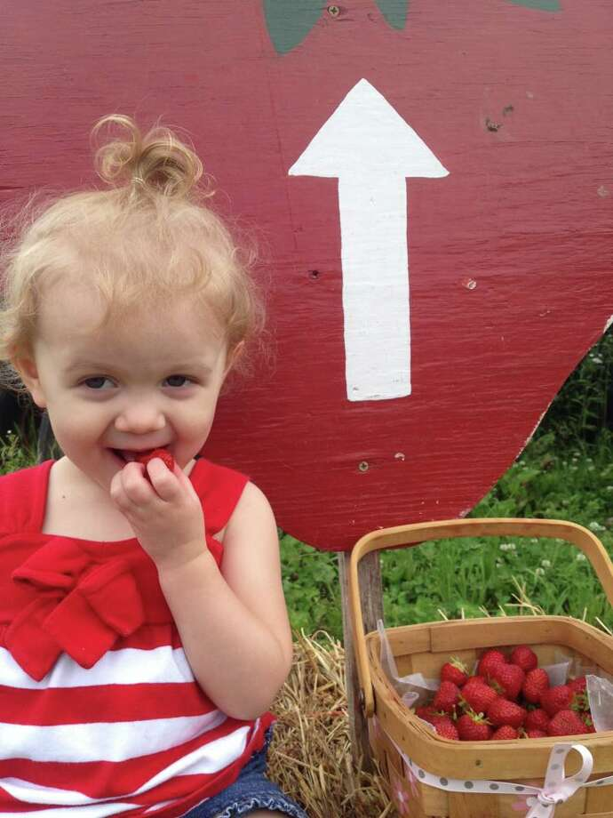 Jordyn, the daughter of Jill and Brian Cuccolo of Bethlehem, relishes the task of strawberry picking. The 23-month-old was strawberry picking at Stanton?s Farm in Feura Bush.  (Carrie Gill)