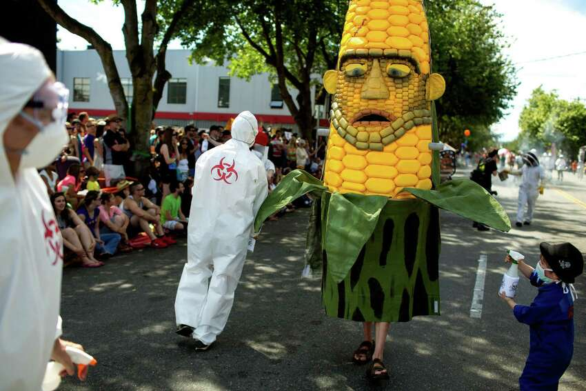 A young boy spritzes down a gigantic ear of corn with fake toxins at the 25th Fremont Solstice Parade on Saturday, June 22, 2013, in the Fremont neighborhood of Seattle. The parade, usually held at noon, was pushed to 3 p.m. this year.